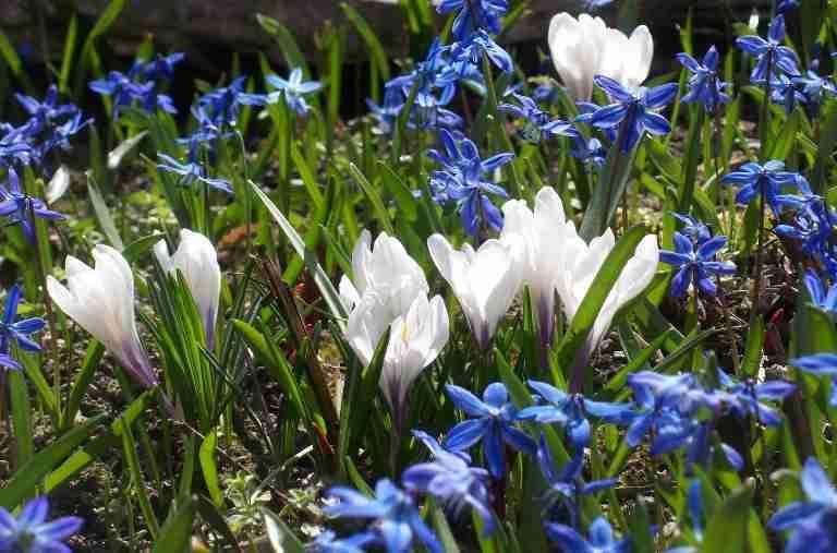 tuin voorjaar-onderhoudsvriendelijk tuin-florera tuinontwerp.