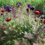 GARDENADVICE WITH BEAUTIFUL IRIS, PAEONIA AND MORE DEEP COLOURS WE USE IN THIS GARDEN.