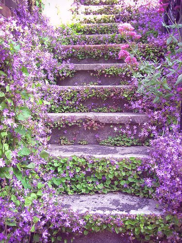 FLORERA ADVICE IN FRANCE OR SPAIN, Campanula kan overal.