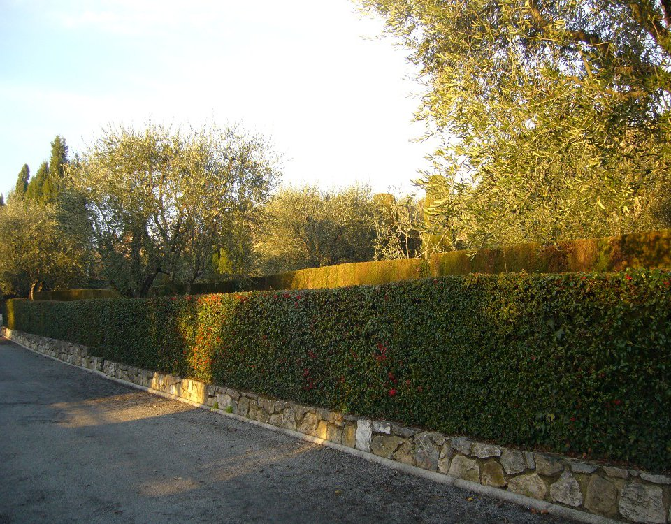 HEDGES IN THE SOUTH OF FRANCE.