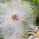 tuingroenplan-beplantingsplan-mooie tuin herfst- Florera tuinidee.