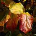 gezonden boom van het jaar zorgt voor onderhoudsvriendelijke tuin, voor kleine en grote tuinen.