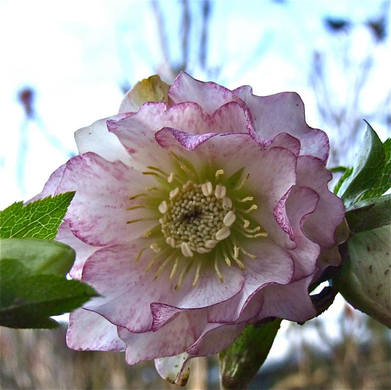 Tuinadvies voor een mooie tuin in de 1ste maanden van het jaar, Florera tuinontwerp.