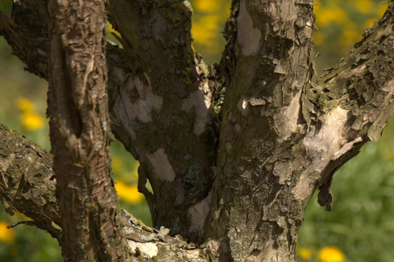 Kleine boom voor moderne tuin-natuurrijke tuin-FLORERA tuinen ea. buitenruimtes.