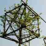 Moderne natuurrijke tuin-onderhoudsvriendelijke tuin-kleine tuin met Cornus mas