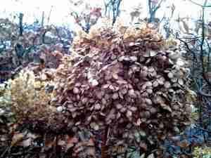 Tuinonderhoud en geen grote winterbeurt-Florera tuinadvies