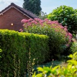 Natuurrijke tuin-tuin Noord Brabant- tuinadvies-FLORERA tuinen ea. buitenruimtes