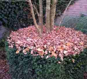 tuinonderhoud-geen winteronderhoudsbeurt-Blad laten liggen voor biodiversiteit.
