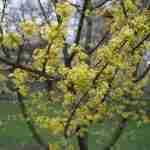 Boom voor liefst kalkrijke bodem-Florera tuinadvies-landscapeadvice