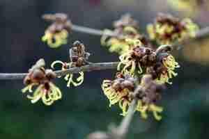 Florera tuinen ea. buitenruimtes-onderhoudsvriendelijke natuurrijke landschappelijke tuin