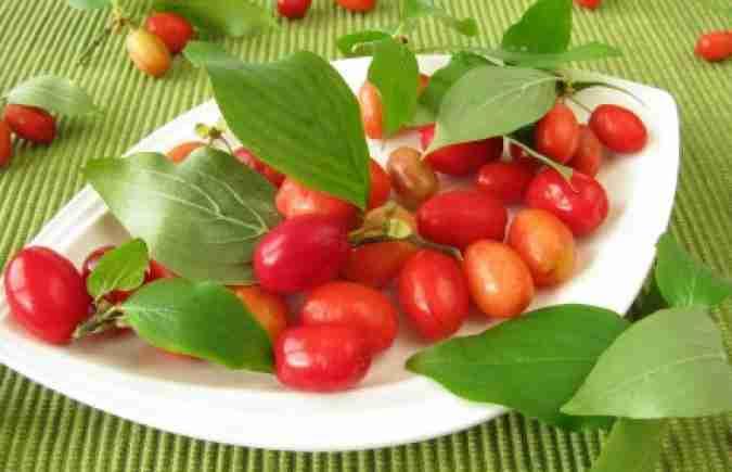 Bessen van de Cornus mas zijn eetbaar en gezond, FLORERA tuinen ea. buitenruimtes.