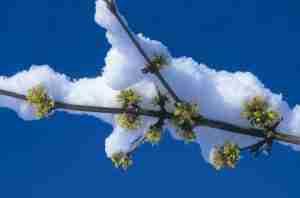 tuin hele jaar rond mooi en gezondheisbevorderend- welzijn tuin-FLORERA tuinadvies