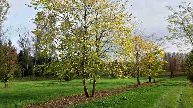 Gardenadvice about unique tree in your garden-florera.nl