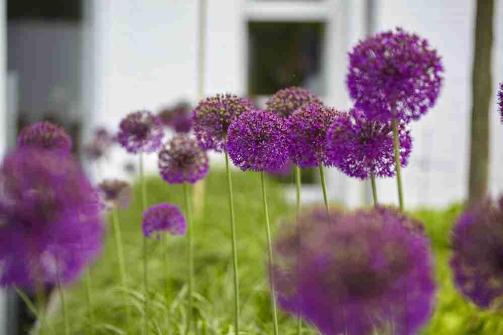 Florera tuinontwerp tuinadvies en tuininrichting met for Strakke tuinen met siergrassen