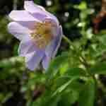Vrolijkheid in de tuin tijdens april met bijzondere tuinplanten na tuinontwerpbureau Heeze.