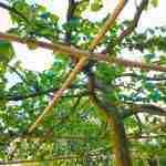 Exclusieve bomen voor natuurrijke tuin door tuinarchitect Marjan de Koning.