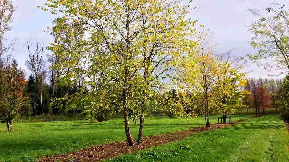 Bomen In Tuin : Bomen voor tuin ea. ruimtes: boomkwekerij van den berk 75 jaar en