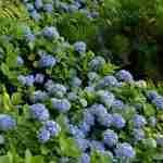 florera tuinarchitect