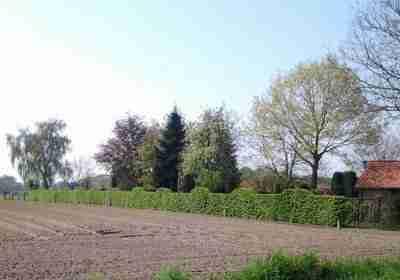 Groene haag op erfscheiding landelijke tuin