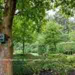 prachtige grote landelijke tuin met 2 delen waaronder een landschappelijk tuindeel