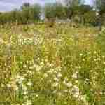 exclusieve landelijke tuin- grote tuin met weelderige beplanting - florera tuinen