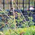 doordacht beplantingsplan in tuinplan van tuinontwerper florera- unieke landelijke tuin 365 dagen genieten van uw tuin