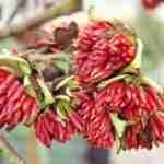 Marjan de Koning tuinarchitect biedt exclusief tuinplan op maat met tuin jaarrond bloei.