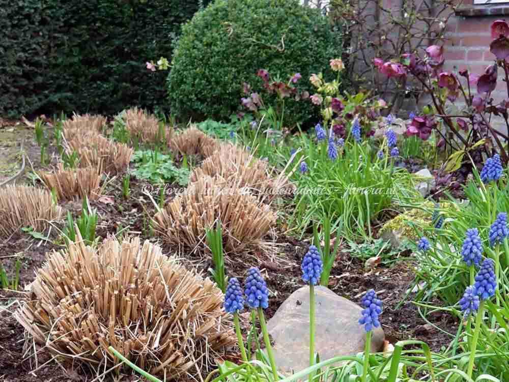 tuinontwerp landelijke tuin- florera.nl