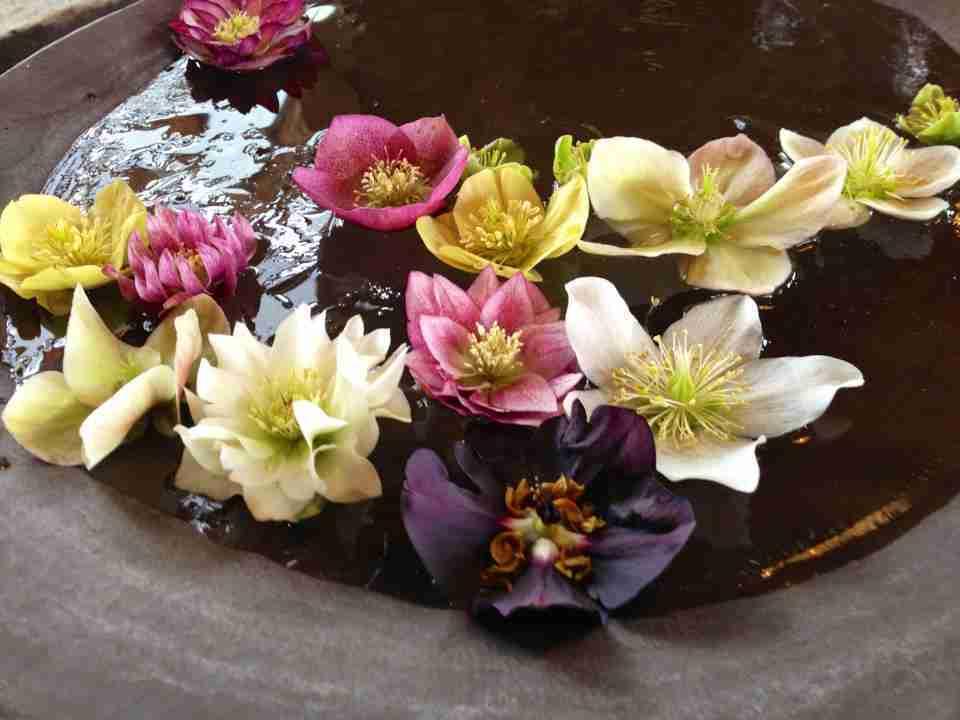 bloemen in veel kleuren in drijfschaal op kwekerij