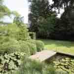 Buxus wolken en bijzondere boom in border landschappelijke tuin.