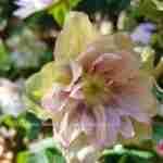 tuinontwerper Marjan de Koning helpt u graag aan uw eigen unieke droomtuin