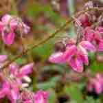 minder tuinonderhiud en meer genieten met Epimedium