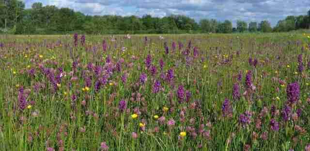 biodiversiteit in graslanden