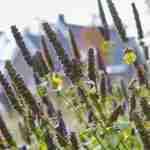 bloemspel in hart van villatuin brengt welness in de tuin