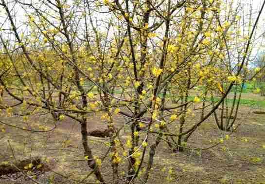 Florera bezoekt kwekerij Ebben voor tuinplan stadstuin
