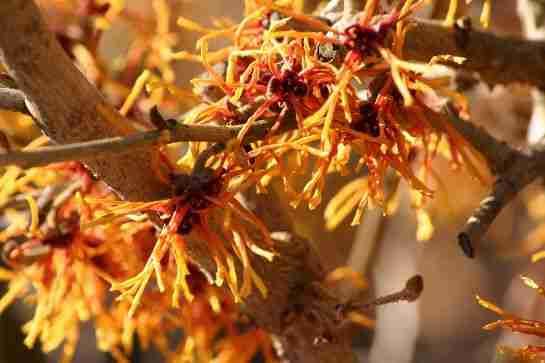 sfeervolle tuinplanten in warme bloeikleuren