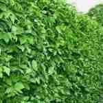 tuinontwerp Marjan de Koning en haag in de tuin