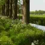 groen ;landschap rond Haaren en Helvoirt