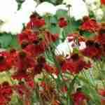 tuinplanten voor vlinders en bijen in landelijke familietuin