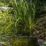 plantenleven in grote waterstroom tuin