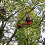 tuinrenovatie- bomenbeheer- snoeien oude bomen in tuin