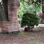 bomenbeheer tuinrenovatie Marjan de Koning tuinarchitect