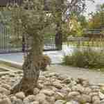 mediterrane tuinsfeer in villatuin