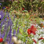 Méditerraan bloemspel in parkachtige tuin Limburg