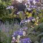 natuurrijke tuin met landelijke ligging.