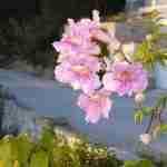 tuin in Zuid Frankrijk- tuin in Spanje