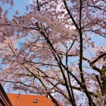 droomtuin met oude bomen Eindhoven- bomenbeheer florera tuinarchitect