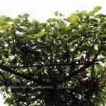 bijzondere boom als dakboom in de tuin