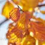 Gouden kleuren in herfsttuin