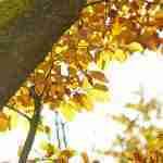 Licht in de tuin tijdens herfsttuin